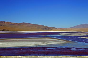 Laguna Colorada (Red Lagoon), a shallow salt lake in the southwest of the altiplano, Eduardo Avaroa Andean Fauna National Reserve, Bolivia, South America