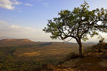 Nechisar National Park, Arba Minch (Arba Migie), Rift Valley region, Ethiopia, Africa