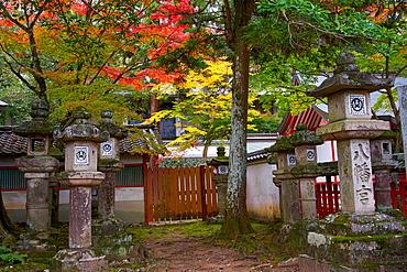 Autumn colours at Tamukeyama Hachimangu shrine in Nara, Honshu, Japan, Asia