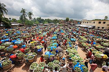 A whole sale mango market at Rajshahi, India