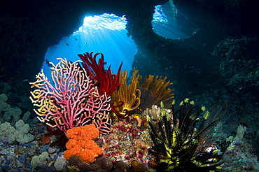 Crinoids and a small gorgonian fan, Raja Ampat  Indonesia