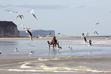 Racehorse training with sulky at low tide, Normandy France