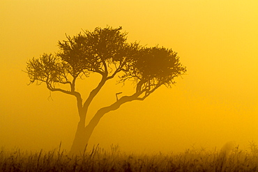 Kenya, Masai-Mara game reserve, mist at sunrise