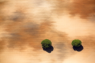 Aerial view of Pine trees in a field, Huelva , Andalusia, Spain