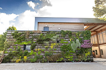 Green wall on a building, summer, Pas de Calais, France