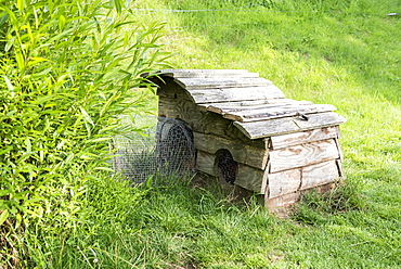 Rabbit hutch in a garden, summer, Moselle, France