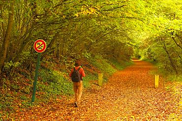 Walker walking on a green stream following an old abandoned railway line connecting Beauvais to Amiens - in autumn, Picardy, France.
