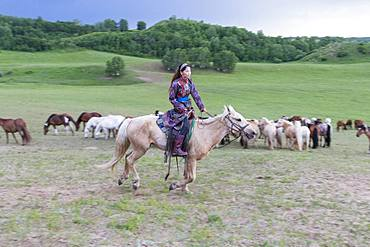 Mongolian horsewoman dressed with traditional clothes, lead a troop of horses running in a group in the meadow, Bashang Grassland, Zhangjiakou, Hebei Province, Inner Mongolia, China
