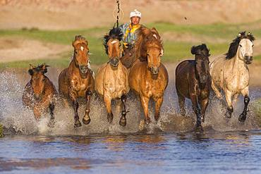 Mongolian traditionnaly dressed with horses running in a group in the water, Bashang Grassland, Zhangjiakou, Hebei Province, Inner Mongolia, China
