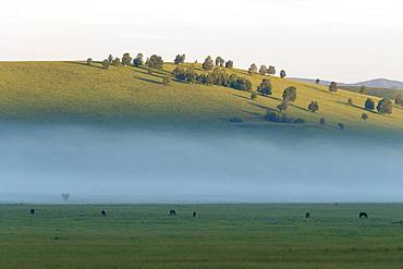 Colline landscape, Bashang Grassland, Zhangjiakou, Hebei Province, Inner Mongolia, China