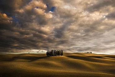 Cypres trees in Val d'Orcia, San Quirico d'Orcia, Siena, Tuscany, Italy