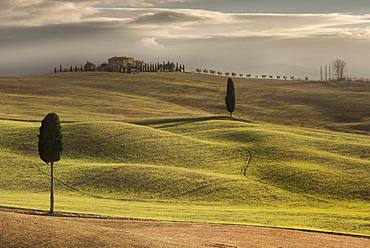 Cypress trees at Terrapille, Pienza, Sienna, Tuscany, Italy