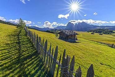 Alpe di Siusi, the famous Dolomite mountain pasture, the largest Dolomite pasture, Dolomites, Tyrol, Italy