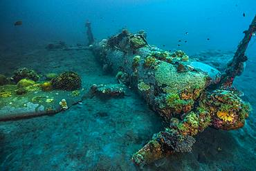 Tara Pacific expedition - november 2017 Kimbe Bay, papua New Guinea, Zero wreck: Coral growth on this wreck is from a period of 74 years ! D: 15 m The ZERO, is a Japanese WW2 fighter plane wreck. This Zero wreck was discovered in January 2000 by local William Nuli while he was freediving for sea cucumbers. He asked the Walindi Plantation Resort dive team if they might know what it was, and when they investigated they uncovered the intact wreck of a Zero fighter, resting on a sedimented bottom in 15 m depth. This World War II Japanese fighter is almost completely intact. The plane is believed to have been ditched, the pilot is believed to have survived, but was never found on the island. He never returned home. Maybe he disappeared in the jungle? On 26th December 1943, during the battle of Cape Gloucester, the Japanese pilot made an emergency landing, ditching his Mitsubishi A6M Zero plane into the sea approximately 100m off West New Britain Province. The plane was piloted by PO1 Tomiharu Honda of the 204st K?k?tai. His fate is unknown but it is believed the he made a controlled water landing after running out of fuel and survived. Although he failed to return to his unit, the plane was found with the throttle and trim controls both set for landing and the canopy was open. There are no visible bullet holes or other shrapnel damage and the plane is still virtually intact after over 70 years underwater. It is a A6M2 Model 21 Zero, made famous for its use in Kamikaze attacks by the Japanese Imperial Navy. The wreck has the Manufacture Number 8224 and was built by Nakajima in late August 1942.