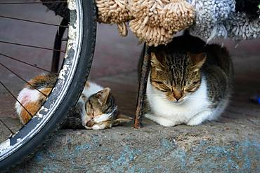 Cat and kitten sleeping on a sidewalk, Essaouira, Morocco