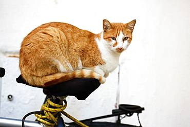 Cat lying on a bicycle, Port of Essaouira, Morocco