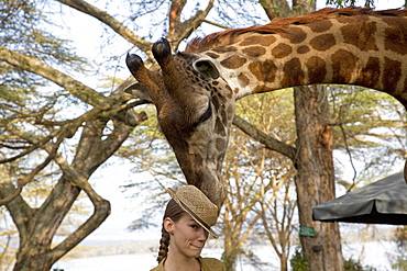 Eric a tame wild person-friendly giraffe investigates straw hat worn by lady tourist guest at Elsamere Naivasha Kenya