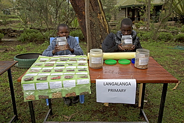 Seed collection native African trees for planting Langa Langa School, Kenya
