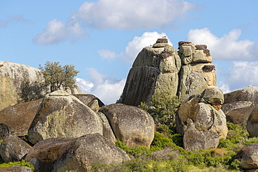 White Stork (Ciconia ciconia) nesting on top of big boulders
