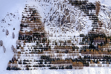 Plantation avalanche protection in Oisans, Ferrand Valley, Ecrins NP, Oisans, Northern Alps, France