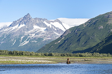 Grizzly bear (Ursus arctos horribilis) sitting in front of mountains, Katmai National Park, Alaska, USA