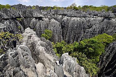 Landscape of tropical karstic phenomena in the Tsingy national park of Bemaraha, Small Tsingy area, UNESCO World Heritage site, Early November: end of dry season, Madagascar