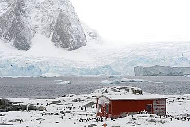 A Gentoo penguin colony, Pygoscelis papua, near Groussac Argentinian hut, Petermann Island, Antarctica.