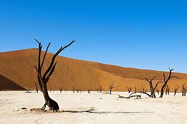 Dead Trees, Deadvlei, Sossusvlei, Namib Naukluft Park, Namib Desert, Namibia.