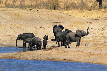African Elephant (Loxodonta africana) at the waterhole, Kruger National Park, South Africa