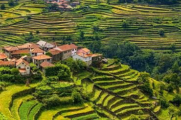 Terraced Crops in the Sistelo Region, Peneda-Ger?s National Park, Northern Portugal
