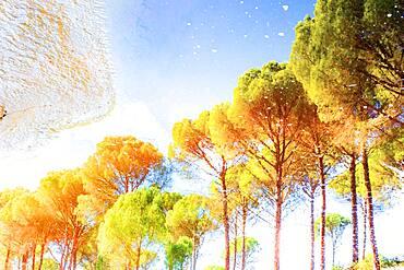 Reflection of trees in Tinto river, Rio Tinto minas, Rio Tinto, Huelva, Spain