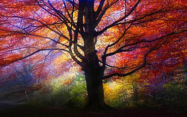night photography in the urbasa forest beech urbasa urederra navarra spain