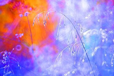 Colors in the stain fields of Spain summer, Yebes, Valdenazar, Guadalajara, Spain