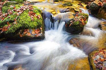 Colourwater of leaves in Reserve of Muniellos spring, Cangas de Narcea Muniellos beech asturies spain
