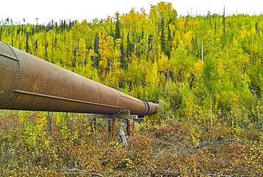 Davidson ditch: conduit bringing the water of excavators and prospectors, Steese highway, from Fox to Circle, Alaska