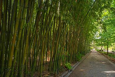 Bambouseraie, Bamboo plot and shady alley of the Montpellier botanical garden