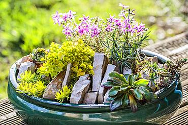 Realization of a mini garden of crevice garden in pot, in step by step.