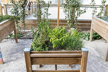 Aromatic plants in a wooden bin, summer