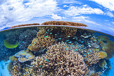 Corals on a reef in the S-shaped channel during a high low tide, Mayotte