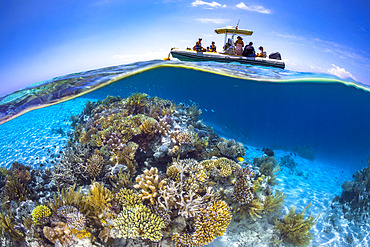 Coral reef in the lagoon in Mayotte. A week end in Mayotte, along the S pass to admire the reef and the magnificent corals that compose it.