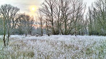 Winter landscape of an island of the Loire, Barreaux island in winter by -6°C in January, France