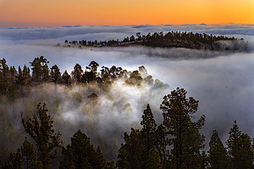 Teide National Park, Tenerife. Sea of ??clouds, south of the island. It is caused by the trade winds, which push the clouds against the summit, usually forming between 800 and 1000 meters of altitude. Canary Islands.