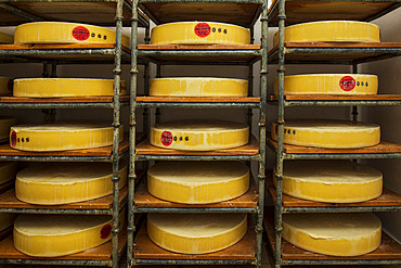"""Cellar of the Vercors-Lait cooperative, in Villard-de-Lans, where the """"Bleu du Vercors-Sassenage"""" is made, Isere, France *** Local Caption *** This blue-veined cheese, made from cow's milk, has had the official French label of appellation d'origine contr?l?e (AOC) since 1981 and the European Community's protected designation of origin (AOP) since 2012."""