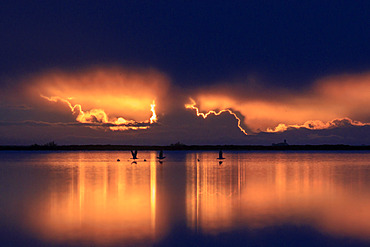 Sunrise on a pond in the Camargue, France