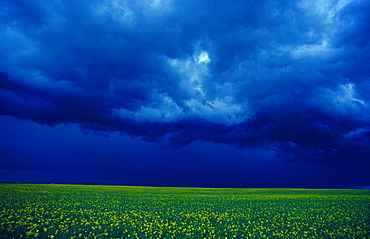 Alberta landscape thunderstorm over canola field prairie cloud formation North America America