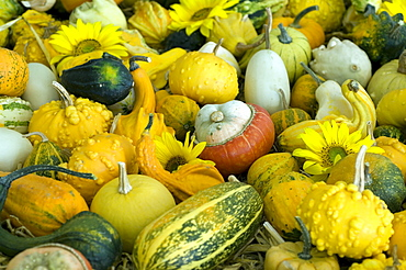 various pumpkin varieties