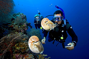 chambered nautilus two divers viewing nautilus Palau Micronesia - 869-2328