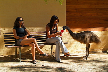 emu emu looking for food and two woman sitting on a bench in zoo portrait Zoo Sydney New South Wales Australien