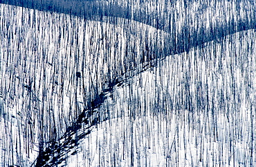 burned mountain forest in winter