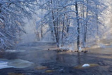 frozen river and riverside with trees in winter at 30 degrees celsius below zero Sweden Scandinavia Europe